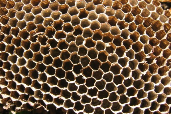 Bee Propolis Benefits For Skin